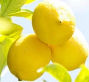 レモン塩の栄養と効能